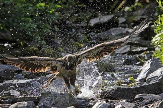 predators-and-their-preys06.jpg