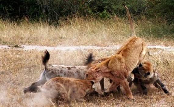 predators-and-their-preys08.jpg