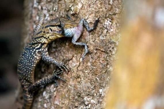 predators-and-their-preys10.jpg