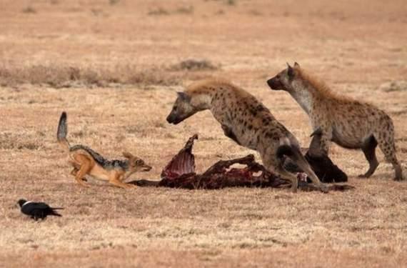 predators-and-their-preys11.jpg