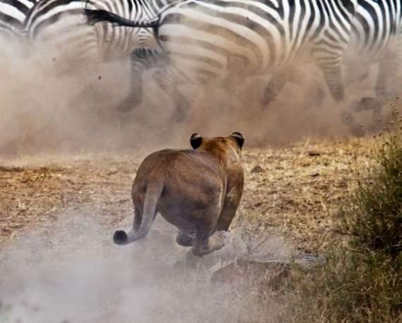 predators-and-their-preys12.jpg