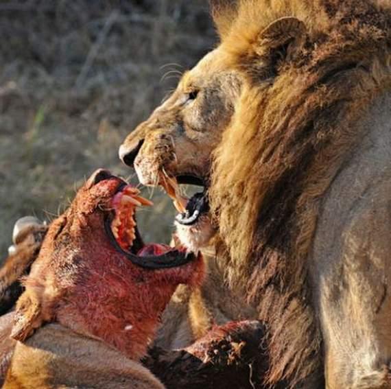 predators-and-their-preys13.jpg