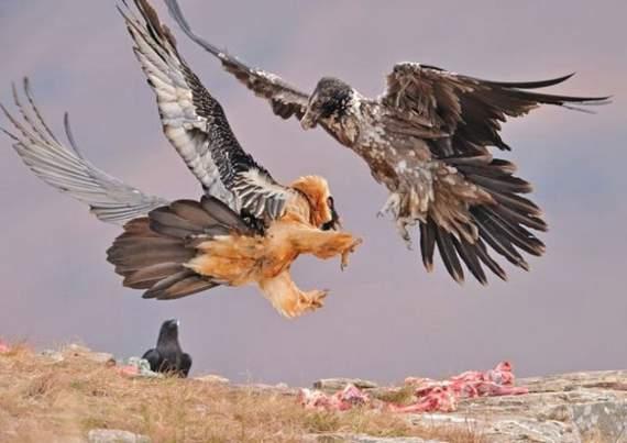 predators-and-their-preys16.jpg