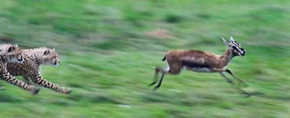 predators-and-their-preys18.jpg