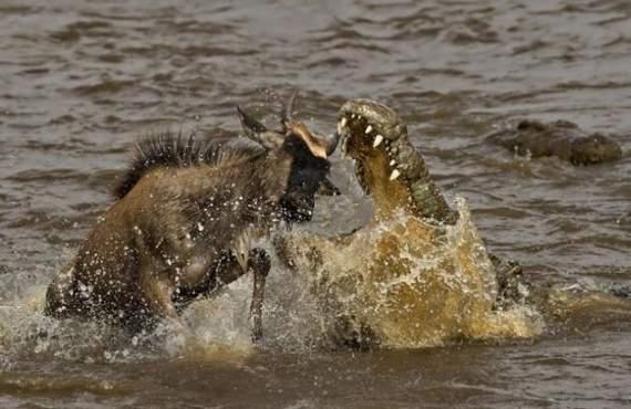 predators-and-their-preys19.jpg
