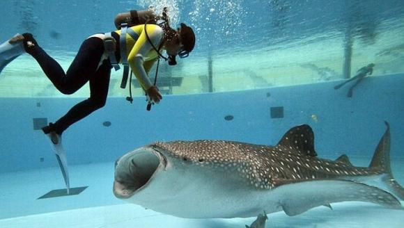 shark_02.jpg