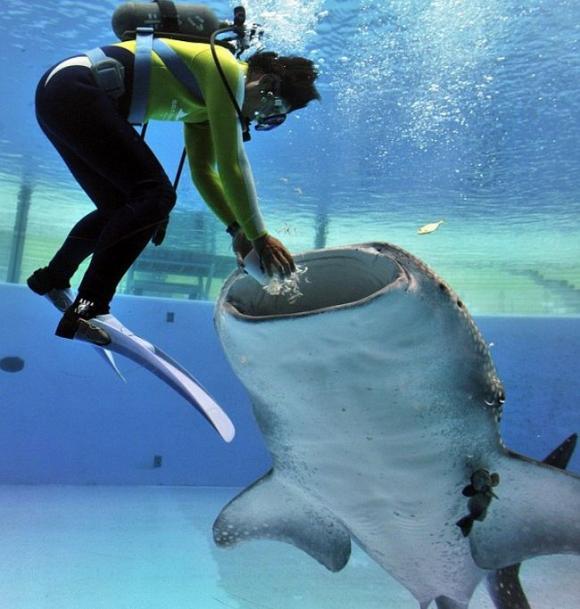 shark_03.jpg