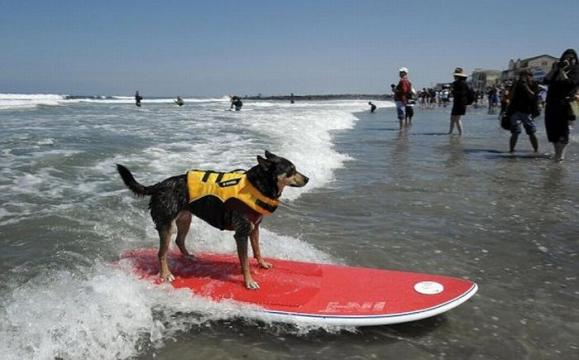 surf_04.jpg