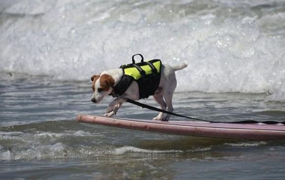 surf_06.jpg
