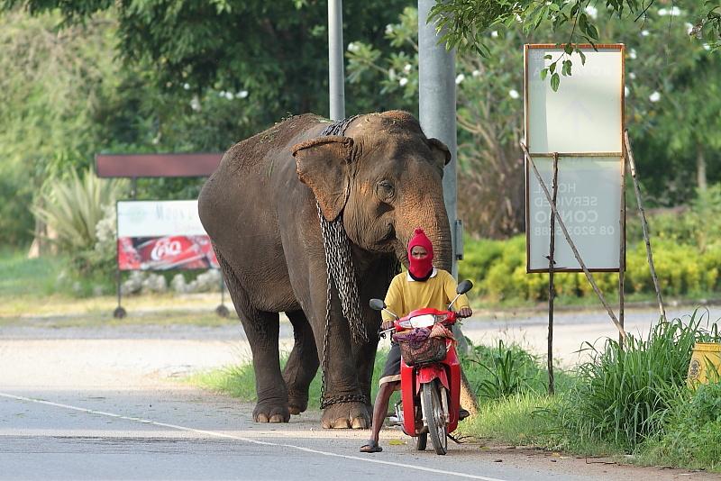 象さんのご出勤