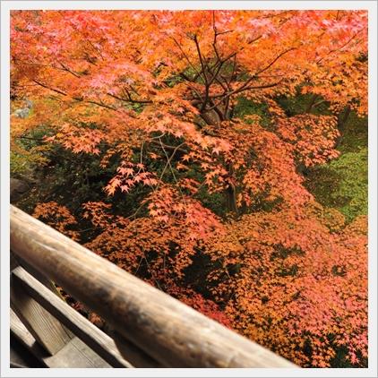 橋の下も紅葉