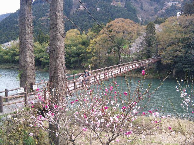 恋の吊り橋 20110417