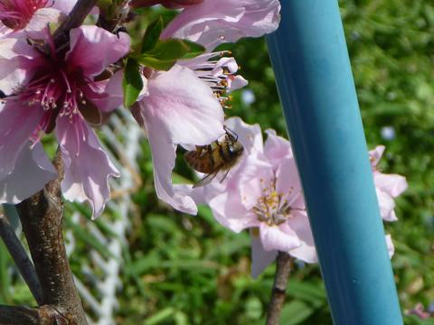 ミツバチですよね?