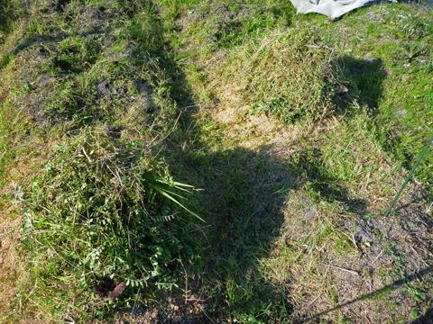 刈り草を盛ってみた