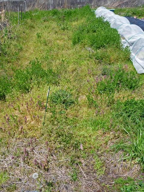 すっかり草原になってしまっ