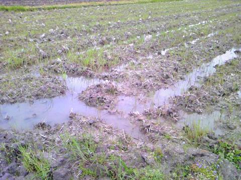 田んぼに水がたんまり…