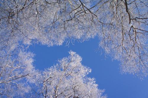 緑ヶ丘公園霧氷