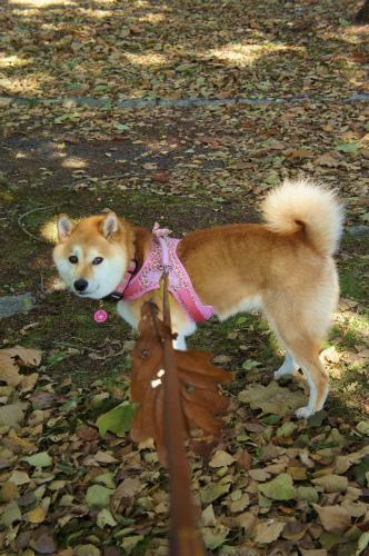 葉っぱとお散歩