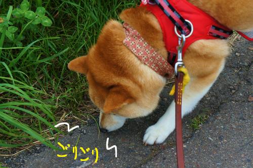 ニオイ探知犬。