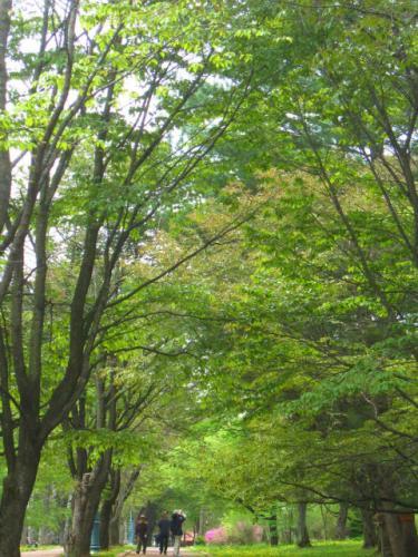 新緑の緑ヶ丘