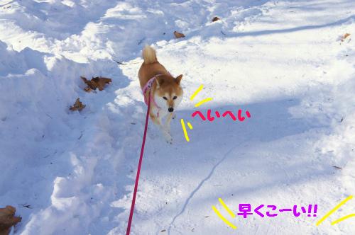 散歩の主導権