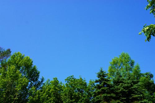 夏が来たー!!