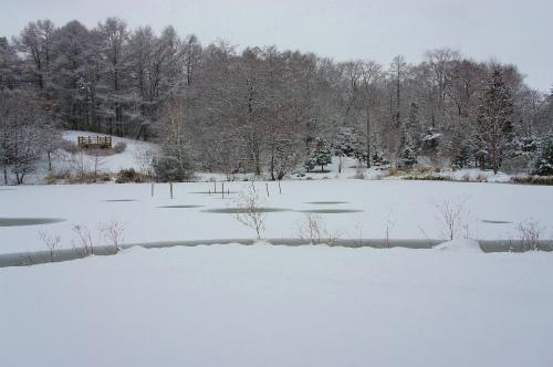 緑ヶ丘公園・池