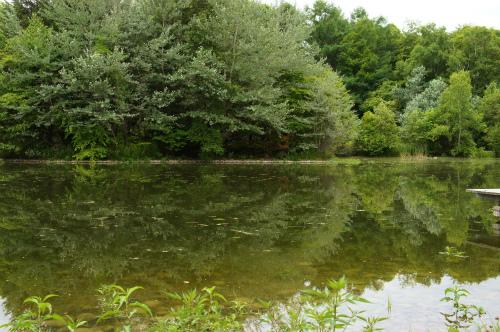 緑ヶ丘の池