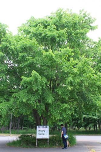 前田森林、自己紹介の木