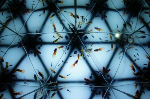 山の水族館、金魚の万華鏡