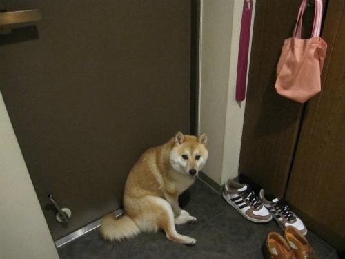 2010/7/24花火