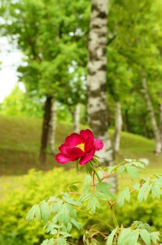 緑ヶ丘の花