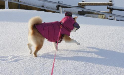 雪はともだち第一弾。