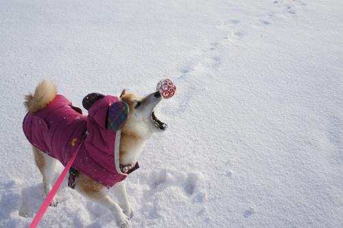 雪はともだち♪