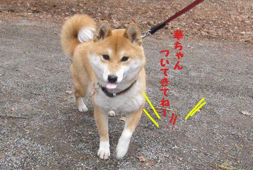 モモちゃんナビ