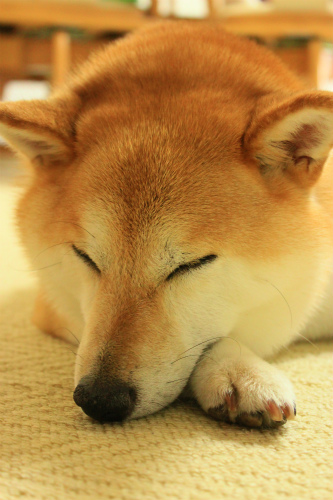 おやすみですよ