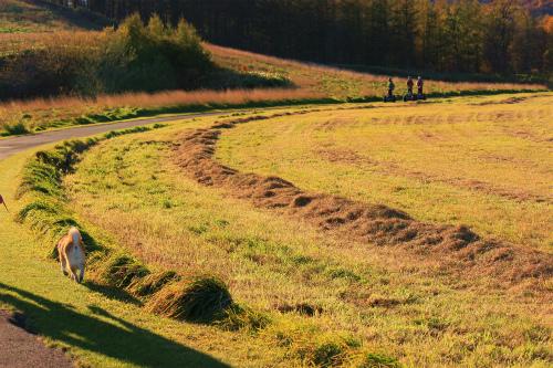十勝千年の丘へ