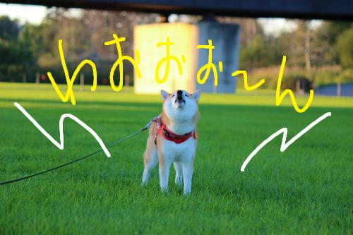 2012108十勝川河川敷