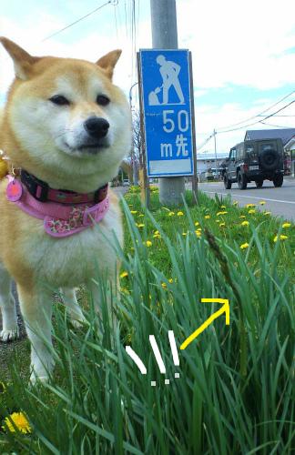 5/23あ散歩