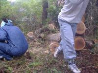 薪狩り#2