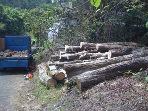 薪狩り#3