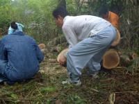 薪狩り#1