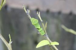 butterfly#3