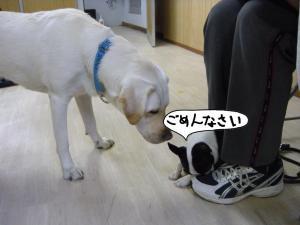 繧ウ繝斐・+(2)+・・DSCN0788_convert_20101118024746