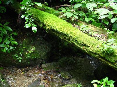軍刀利神社11