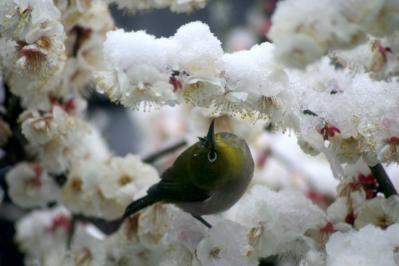 2012_cherry_03