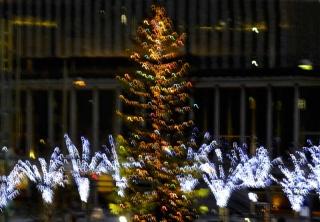 131217_tree_01w.jpg