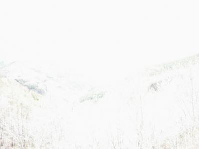 真っ白な写真
