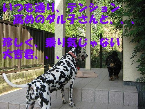 IMG_3847 - コピー