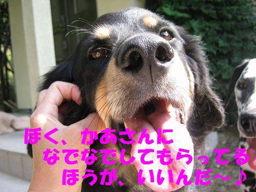 IMG_3884 - コピー
